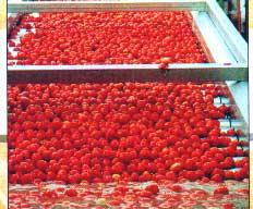 کاربرد دیگ بخار جهت تولید رب گوجه فرنگی